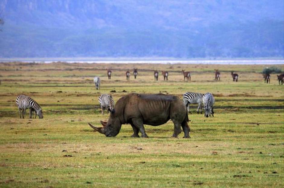Experiencing the most exclusive Tanzania Safari lodges