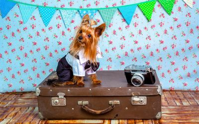 Pros and Cons of Traveling With Pets
